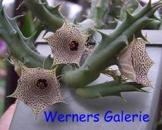Werners Galerie